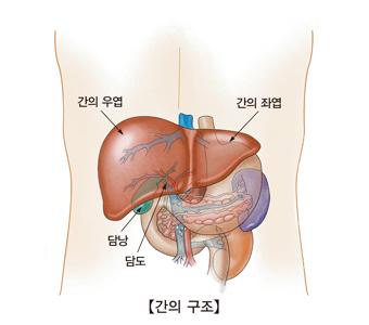 급성 B형 간염